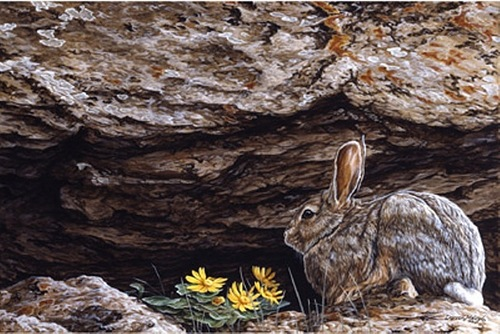 BASKING IN SUNRAYS - COTTONTAIL, Darren Haley