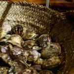 pearl clams outside are quite unattractive