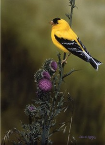 GOLDFINCH AND THISTLE, Darren Haley