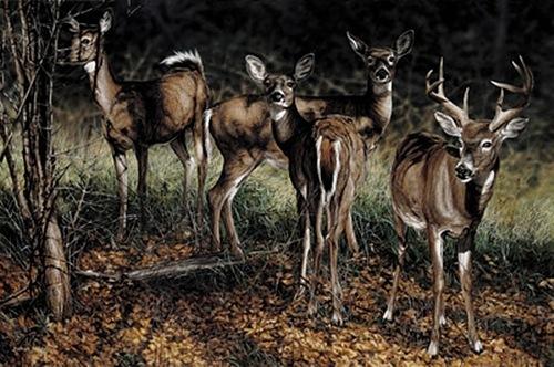 FOREST SHADOWS, Darren Haley