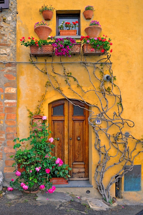 Wall and door decorated with a plant