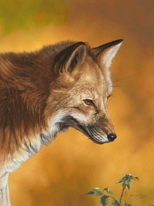 FOX PORTRAIT, Darren Haley