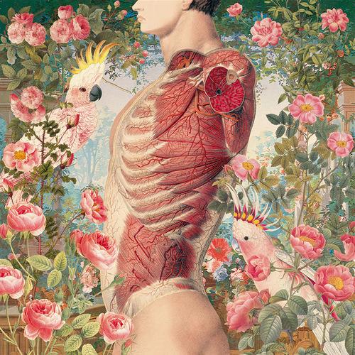 Anatomy of flowers and birds by Juan Gatti