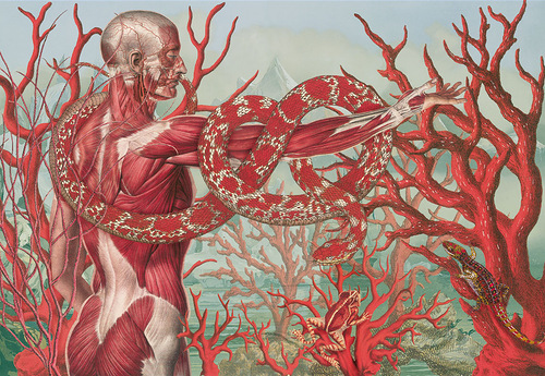 Snakes and tree trunks. Anatomy painting by Argentinian artist Juan Gatti