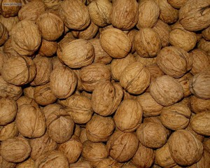 A squirrel's brain is almost the size of a walnut.