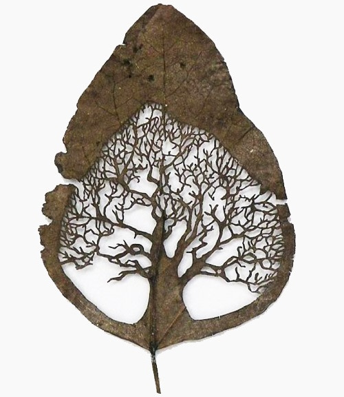 Tree of life. Artful Leaf cutting by Spanish self-taught artist Lorenzo Duran