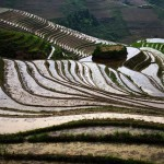Patterns of rice fields