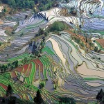 Resembling a painting, terraced fields