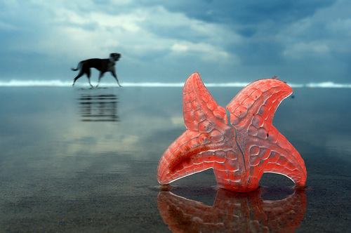 Starfish and a dog. Fantasy by Romanian photographer Hermin Abramovitch, Israel