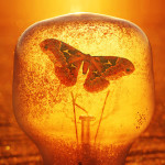Butterfly trapped in a flask. Photographer Hermin Abramovitch, Israel