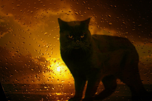 Behind the wet glass. Photographer Hermin Abramovitch, Israel