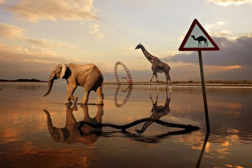 Elephant and giraffe walking along the water surface, while the road sign depicts camel