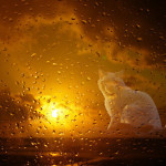 White cat behind the glass. Photographer Hermin Abramovitch, Israel