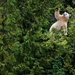 White bear in a tree