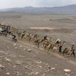 Caravan of camels in Danakil Depression desert. Photographer Viktoria Rogotneva