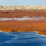 Patches of water in Danakil Depression desert