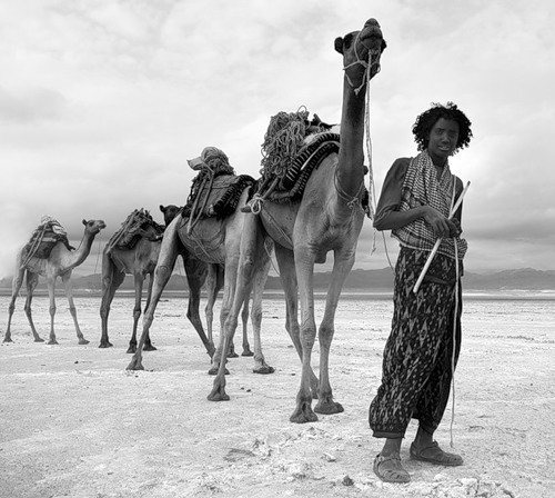 The local with camels. Danakil Depression desert by Russian photographer Viktoria Rogotneva