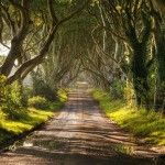 On a sunny day. Dark hedges look quite peaceful