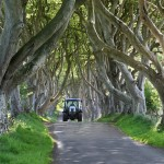Unique old avenue of Beech Trees in Northern Ireland