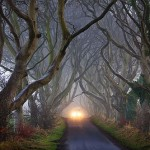 According to the Legend, a supernatural 'Grey Lady' haunts the thin ribbon of road that winds beneath the ancient beech trees