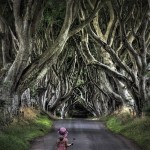A girl walking along the valley. Dark hedges in Northern Ireland