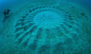 Freelance underwater photographer Yoji Ookata spotted something he had never seen.