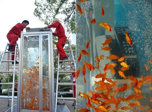 Ordinary Phone Booth turned into Aquariums