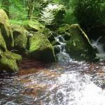 Roaring water. Green Fairy tale illustrations by British artist David Wyatt