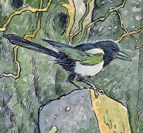 Magpie. Green Fairy tale illustrations by British artist David Wyatt