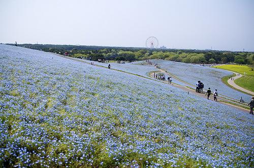 Restored Hitachi Seaside Park