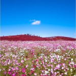 The therapeutic effect of these flower meadows attracts many tourists to the park