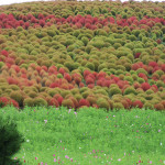 Green and Red shrubs