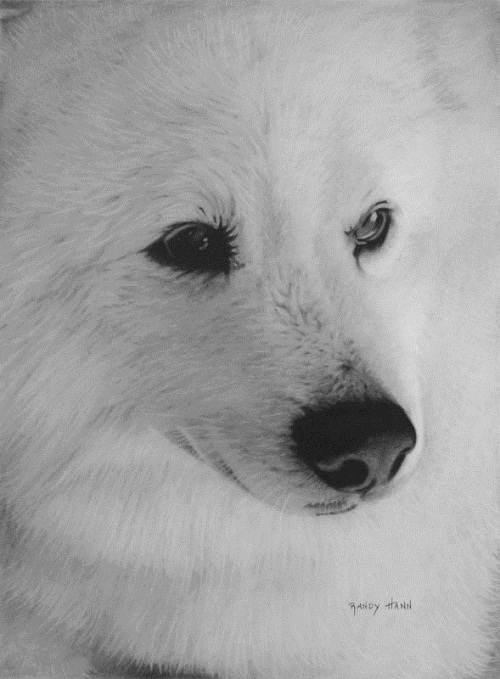 White wolf. Hyperrealistic pencil drawing by American self-taught artist Randy Hann