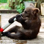 Watering can and Ilzit, the bear