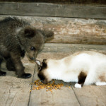 Watching the cat Ilzit, the bear