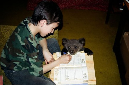 Helping with homework Ilzit, the bear