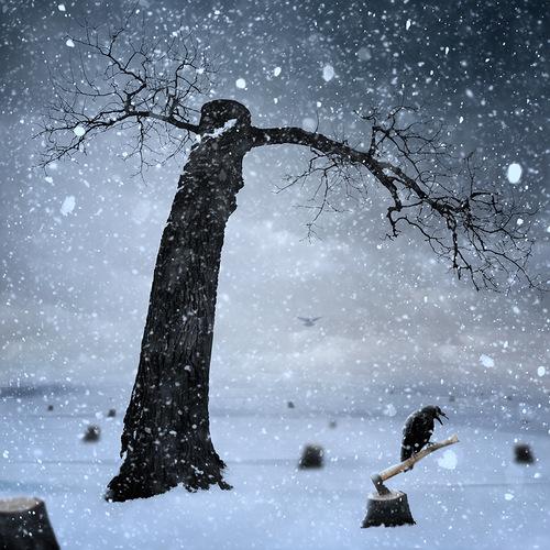 Romanian self-taught photographer Caras Ionut