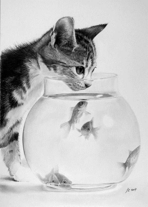 Kitten and fish, hyperrealistic pencil drawing by Franco Clun