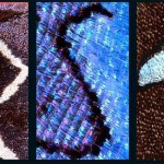 R, S, T – Latin letters on butterfly wings found and shot by Norwegian photographer Kjell Sandved