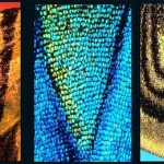 U, V, W - Latin letters on butterfly wings found and shot by Norwegian photographer Kjell Sandved
