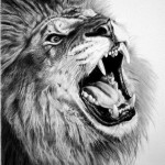 Lion, hyperrealistic pencil drawing by Franco Clun