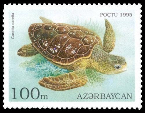 Loggerhead on Azerbaijani stamp