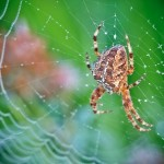 A spider in the web. Macro photography by French amateur photographer David Chambon