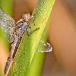 Nature inspired macro photography by French amateur photographer David Chambon