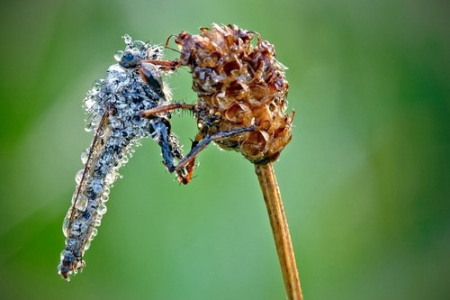 Wonderful Macro photography by French amateur photographer David Chambon