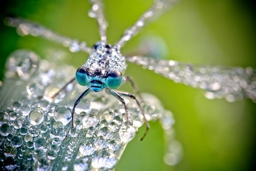 Dewdrops and Insects by French amateur photographer David Chambon