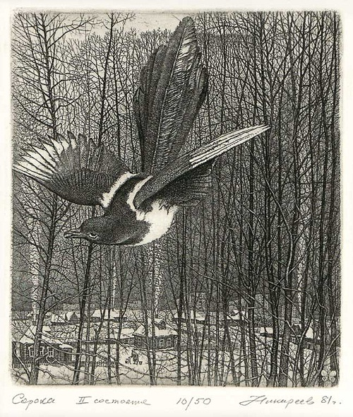 Magpie. Etching graphics by Russian artist Stanislav Nikireev