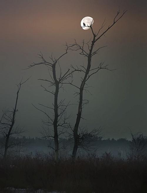 Twilight. Photographer Nikolay Titov