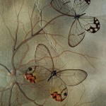 Jo Whaley's photography that looks like painting