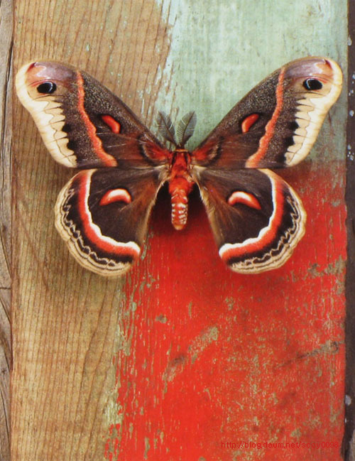 Beautiful butterfly on a red wood. Photograph that looks like painting, by American artist and photographer Jo Whaley